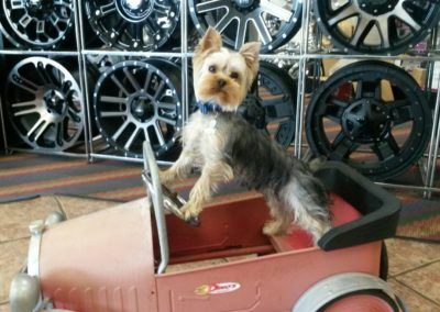 Dog sitting in mini car